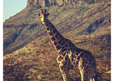 Namibia_065