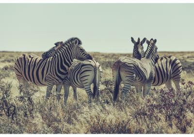 Namibia_099