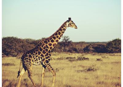 Namibia_104