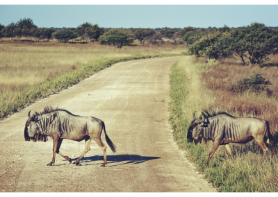 Namibia_105