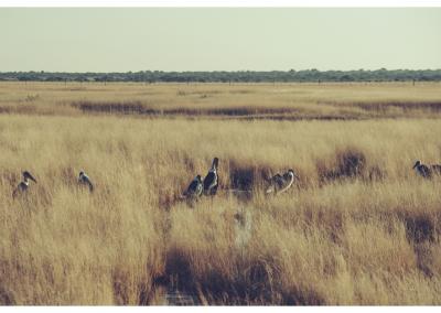 Namibia_109