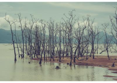 Borneo_019