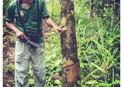 Borneo_048