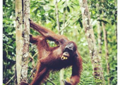 Borneo_053
