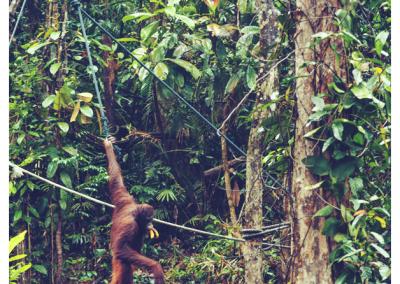 Borneo_055