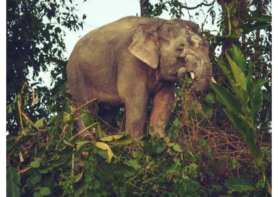 Borneo_074