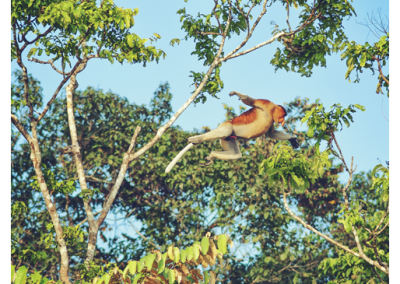 Borneo_082