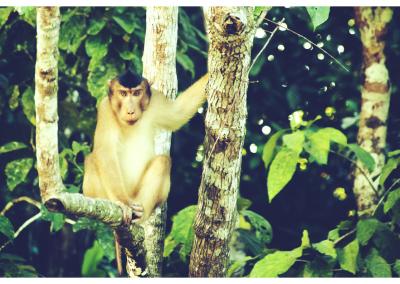 Borneo_084