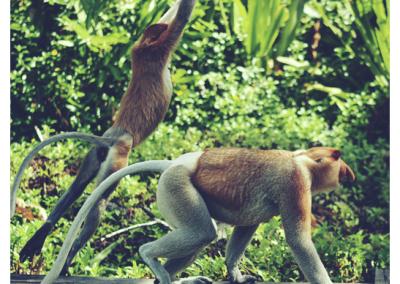 Borneo_106