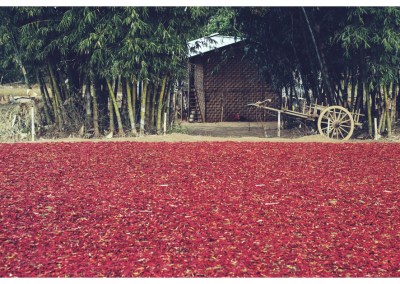 Birma_227