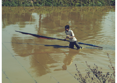 Birma_455