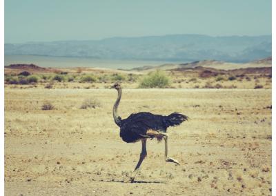 Namibia_008