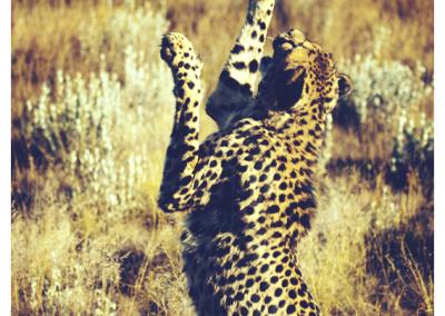 Namibia_063