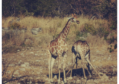 Namibia_097