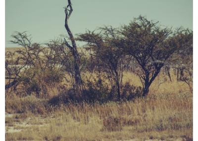 Namibia_098