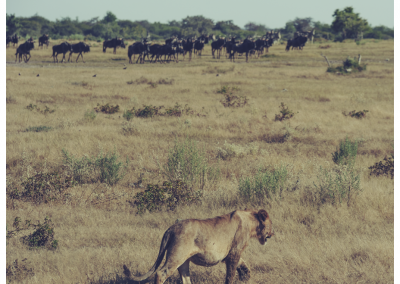 Namibia_111