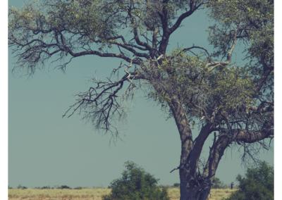 Namibia_112