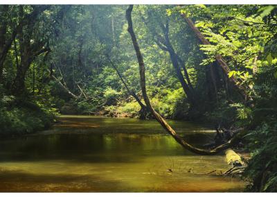 Borneo_036