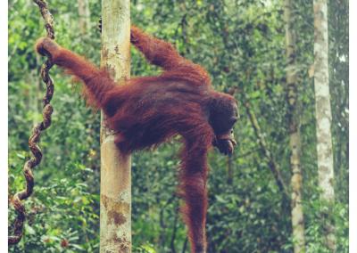 Borneo_052
