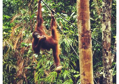 Borneo_054