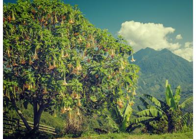 Borneo_070