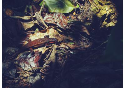 Borneo_081