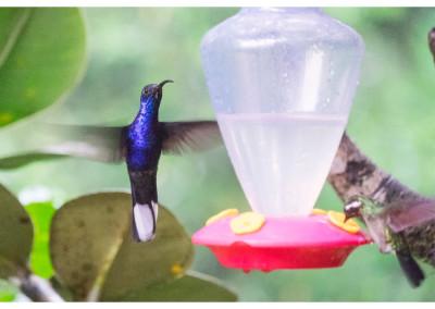 Kostaryka_Monteverde (18)