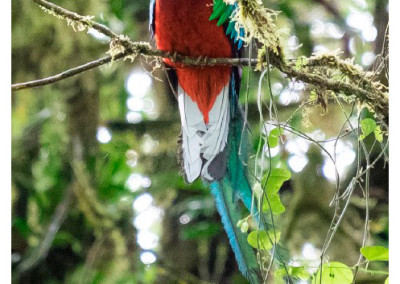 Kostaryka_Monteverde (6)