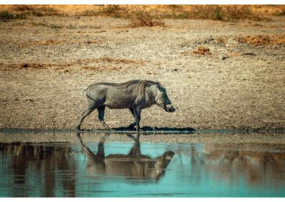 Safari_147