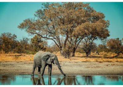Safari_148