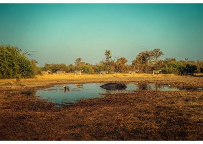 Safari_153