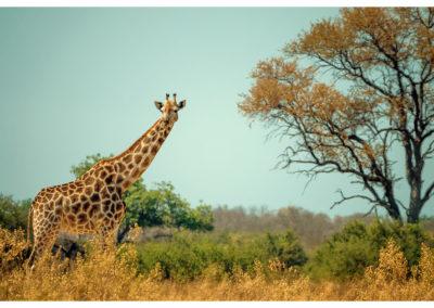 Safari_164