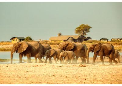 Safari_221