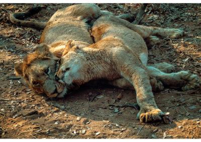 Safari_273