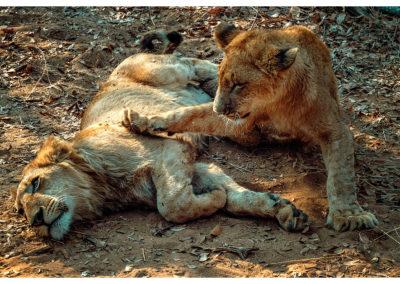 Safari_274