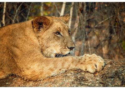 Safari_275