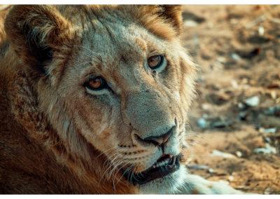 Safari_281