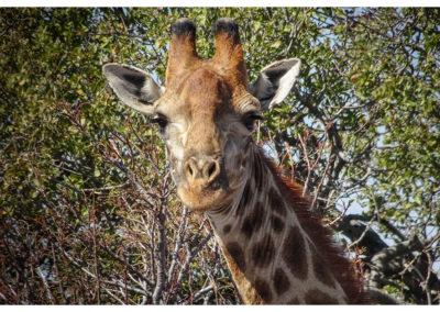 rpa-botswana-zimbabwe-zambia_0038
