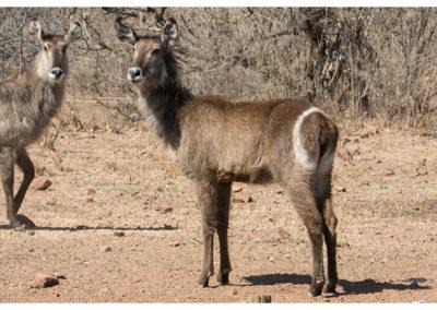rpa-botswana-zimbabwe-zambia_0040