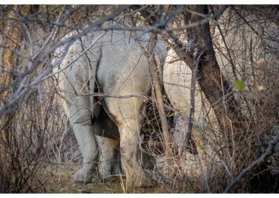 rpa-botswana-zimbabwe-zambia_0044