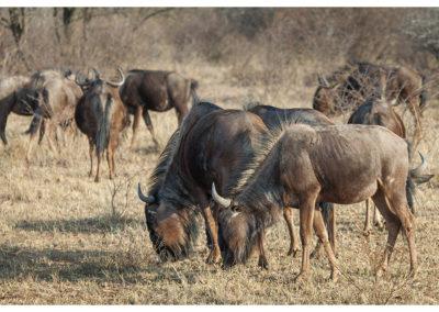rpa-botswana-zimbabwe-zambia_0047