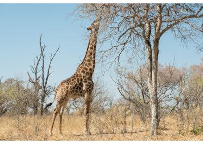 rpa-botswana-zimbabwe-zambia_0066