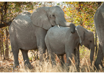 rpa-botswana-zimbabwe-zambia_0068