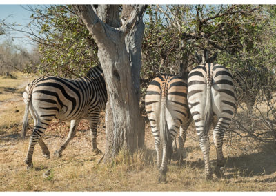 rpa-botswana-zimbabwe-zambia_0069