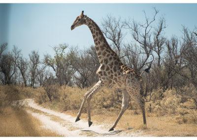 rpa-botswana-zimbabwe-zambia_0075