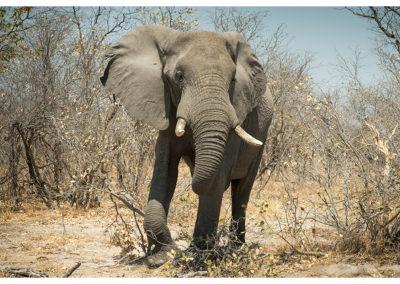 rpa-botswana-zimbabwe-zambia_0076