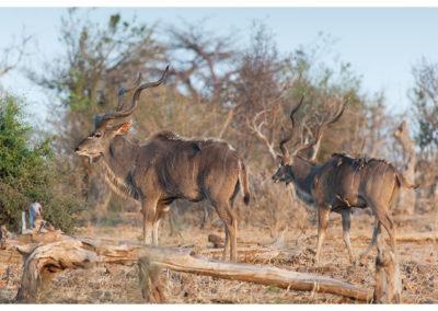 rpa-botswana-zimbabwe-zambia_0084