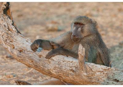 rpa-botswana-zimbabwe-zambia_0086