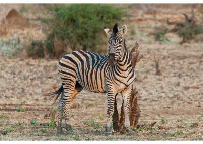 rpa-botswana-zimbabwe-zambia_0088