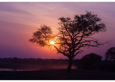 rpa-botswana-zimbabwe-zambia_0090